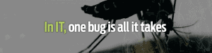 In IT, one bug is all it takes